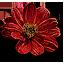beggartick_blossoms_64x64.png.(6659)
