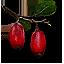 berbercane_fruit_64x64.png.(6660)