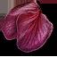 ginatia_petals_64x64.png.(6671)