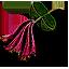 honeysuckle_64x64.png.(6675)