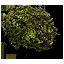 hornwort_64x64.png.(6677)